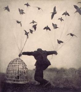 birds #FWF